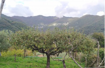 San Pieto di Novella - Passo del gallo - Piana di caravaggio - San Pietro