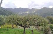 San Pietro - Passo del Gallo - Piani di Caravaggio - San Pietro