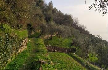 Zoagli - Cappelletta della Maddalena - Semorile - Zoagli