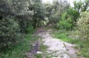 Sentiero presso Pianalunga