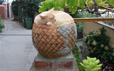 gatto di San Rocco di Camogli