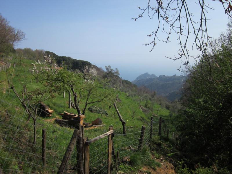 località il Monte (Parco Portofino)