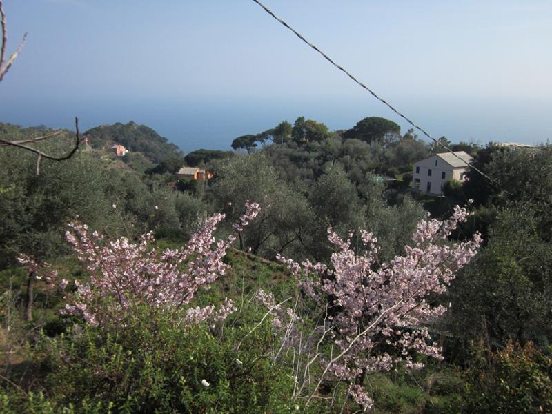 Prato (Monte Portofino)