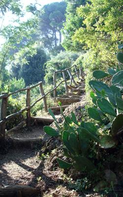 """sentiero nel Parco di Portodino """"Portofino -Base 0"""""""