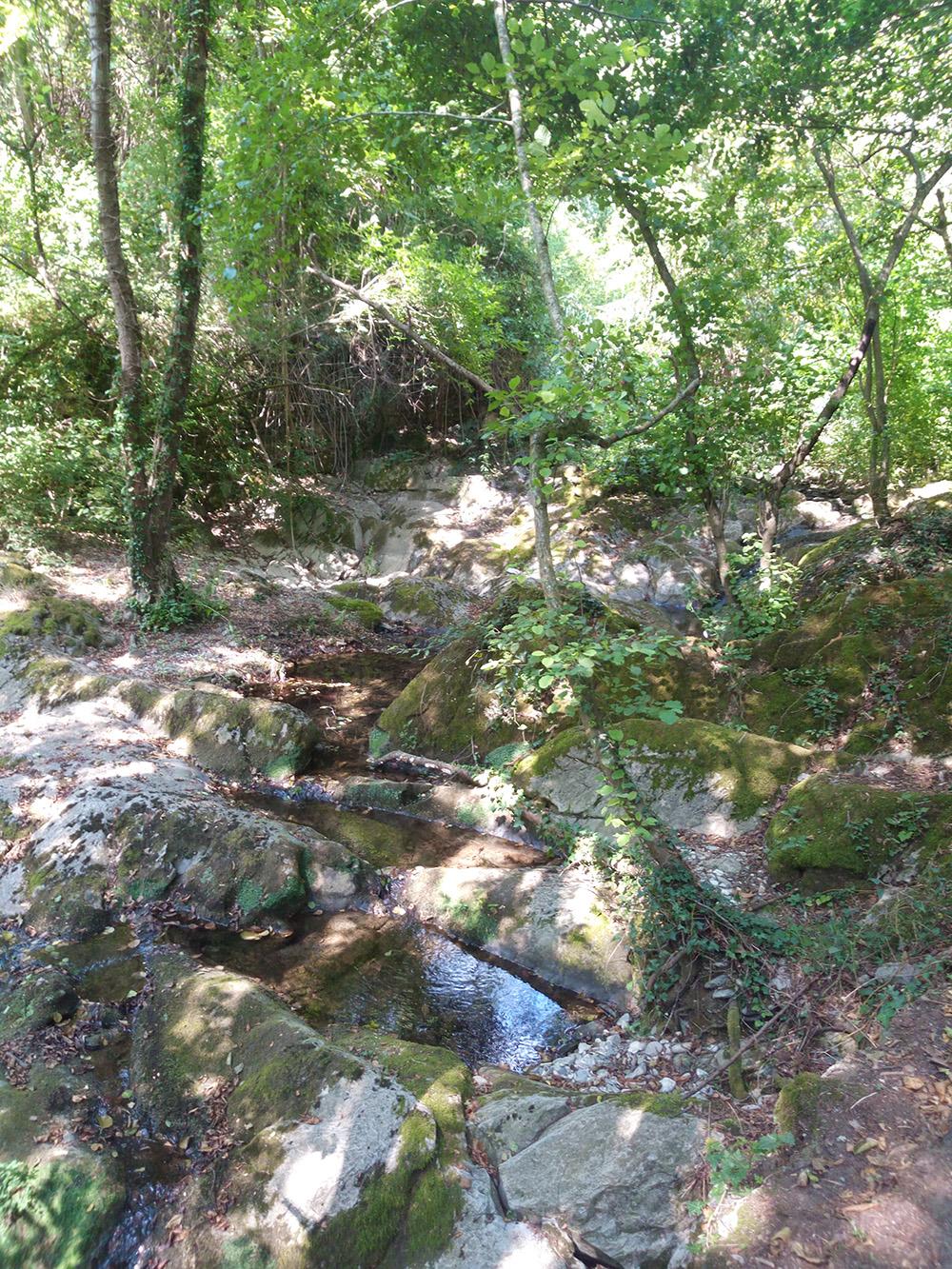 Tuia path